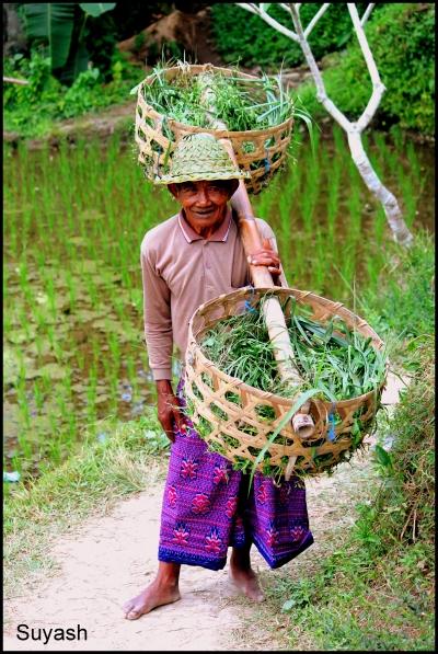 Bali Locals